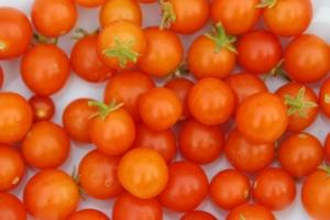 Tomato Cuties